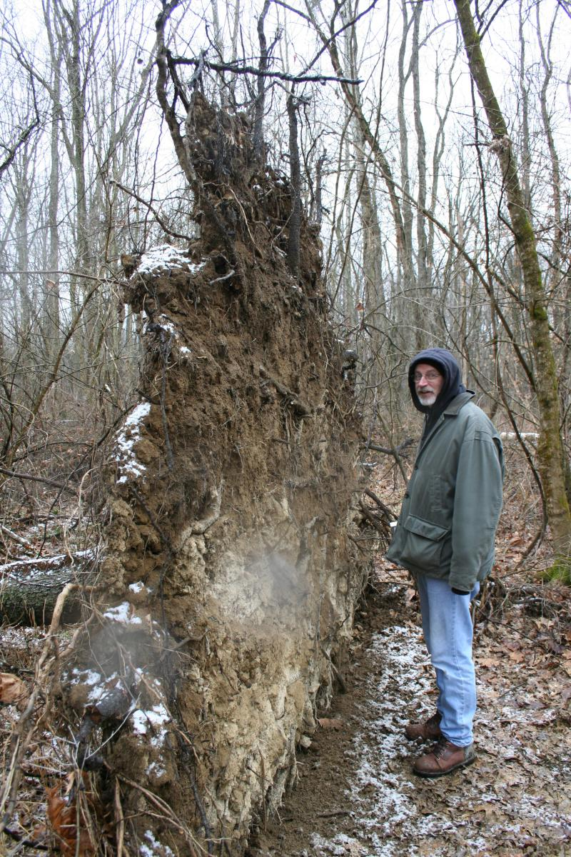 Jerry Iles examining a fallen tree in the woods.