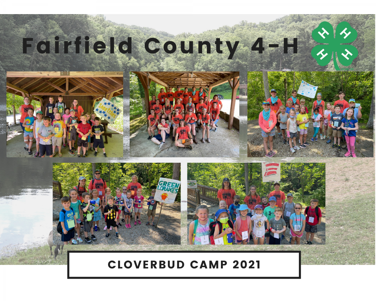 Fairfied County Cloverbud Camp picture of each group of campers that attended
