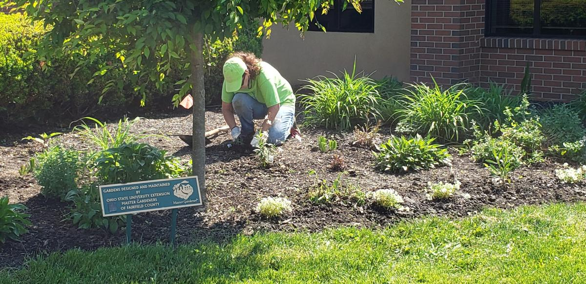 MGV working in the flowerbeds at the Fairfield County Agriculture Center