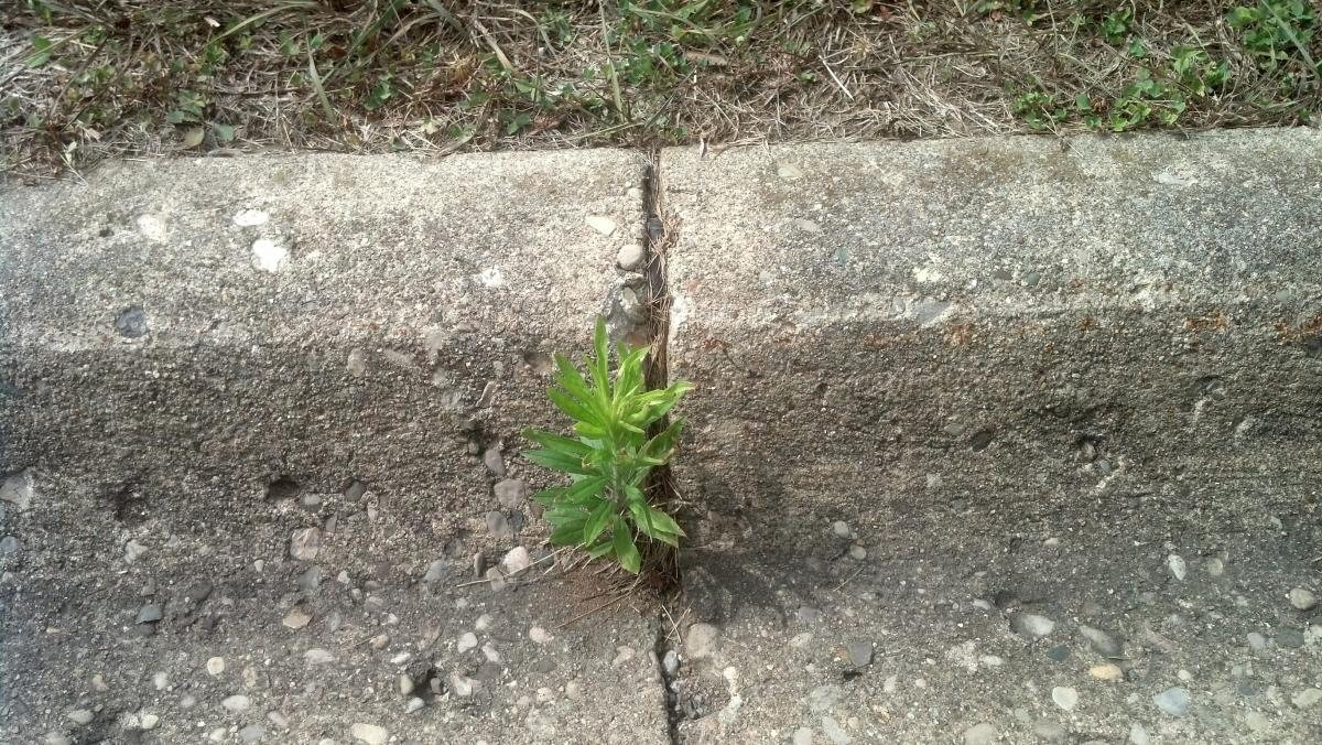 It can emerge anywhere!