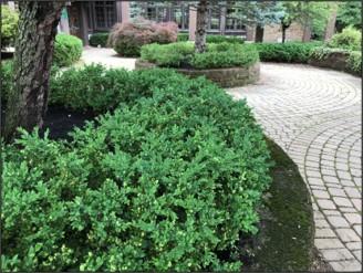 Front Door Entrance plants in Wagnall's Garden